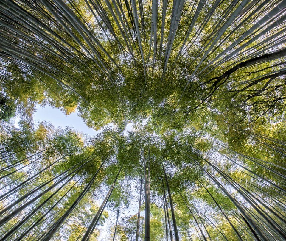 bamboo-57e8dd4543_1280